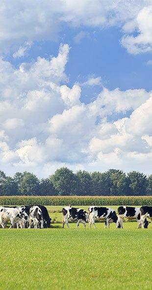 Réduire l'empreinte environnementale dans nos fromageries - Bel Foodservice